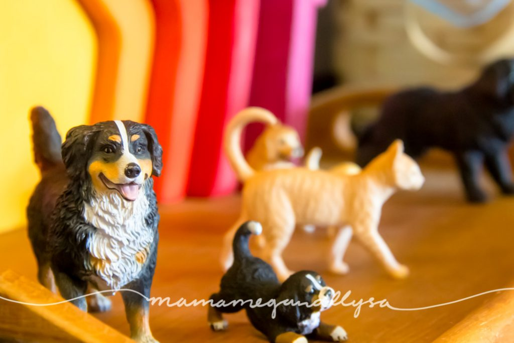 Close up of her animals in front of our homemade house stacker