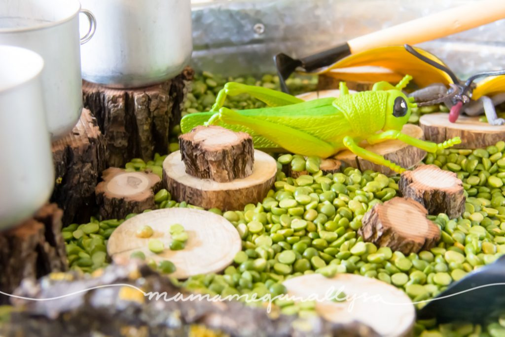 a close up of a large fake grasshopper and wood slices nestled in some split peas