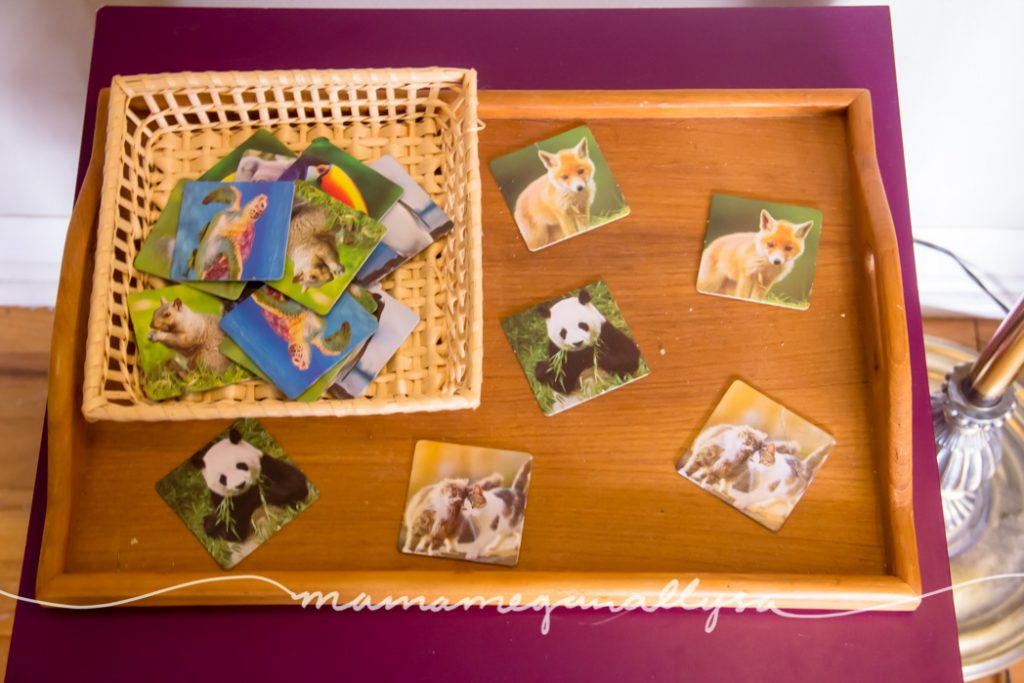 We are starting to introduce the idea of board/card games. We started simple with some animals matching this month