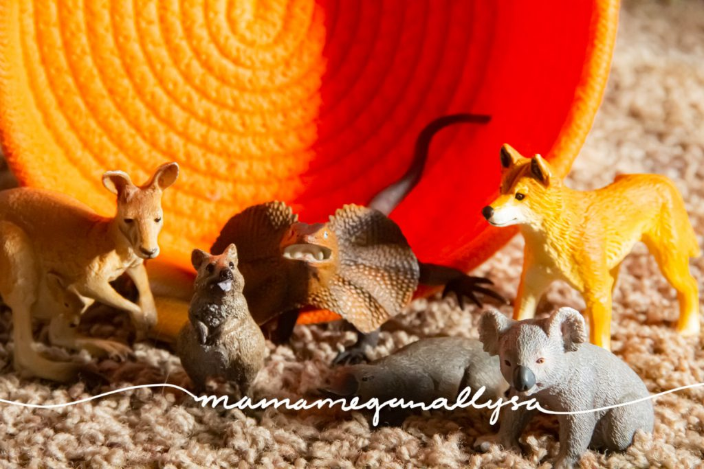 A collection of Australian animals in front of an orange rope basket